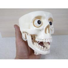 Пластиковый череп